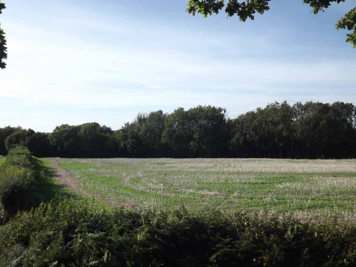 Heathfield, 111 acres